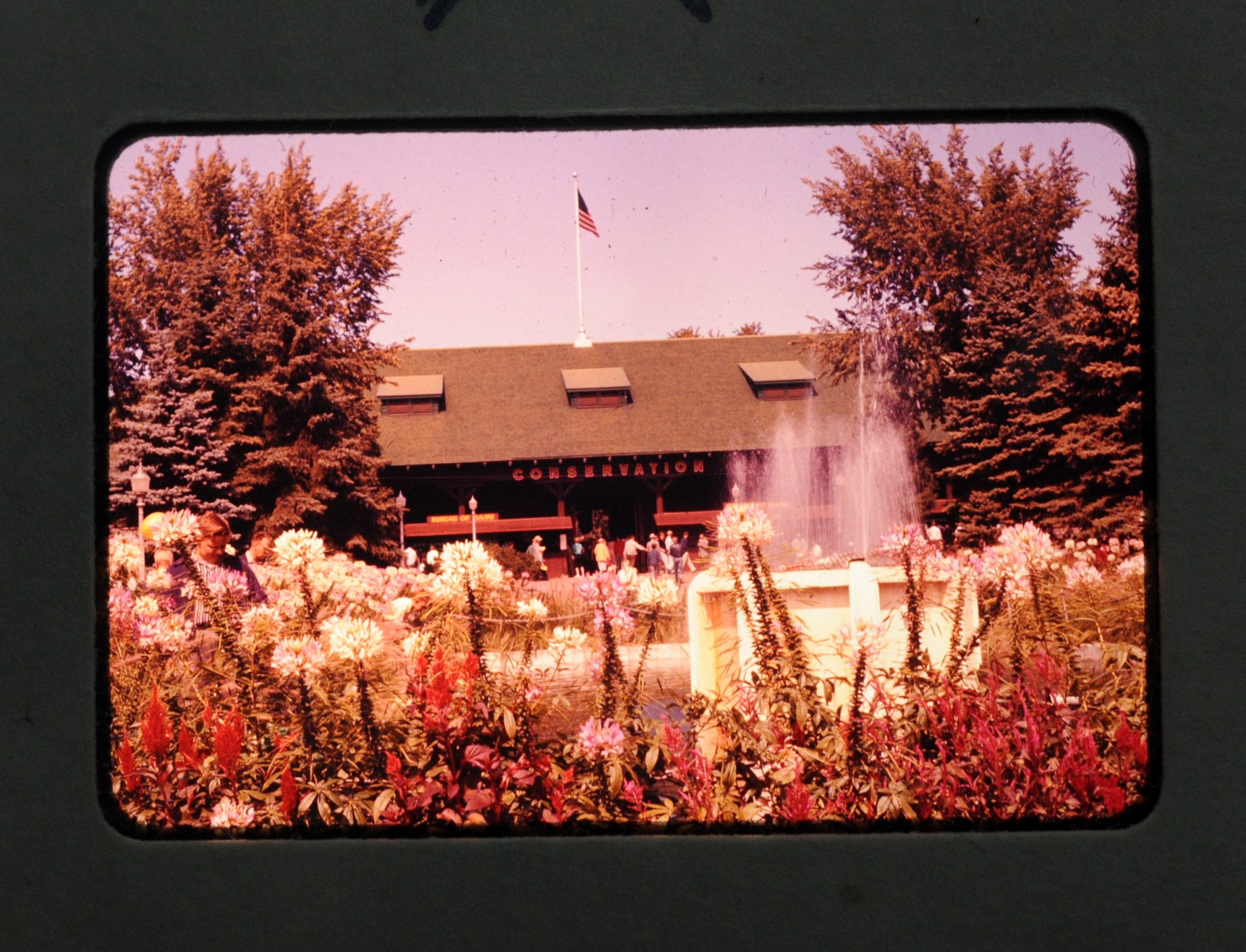 Box of 19 Vintage Slides - flower close-ups, MN State Fair Conservation building, cars